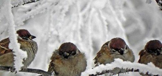 Поет зима — аукает…