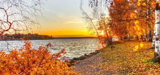 Стихи Плещеева про осень